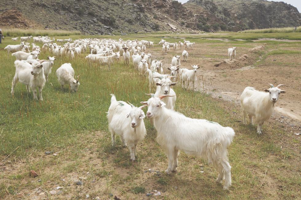 直営牧場の開牧!サステイナブルなカシミヤ産業に向かって。