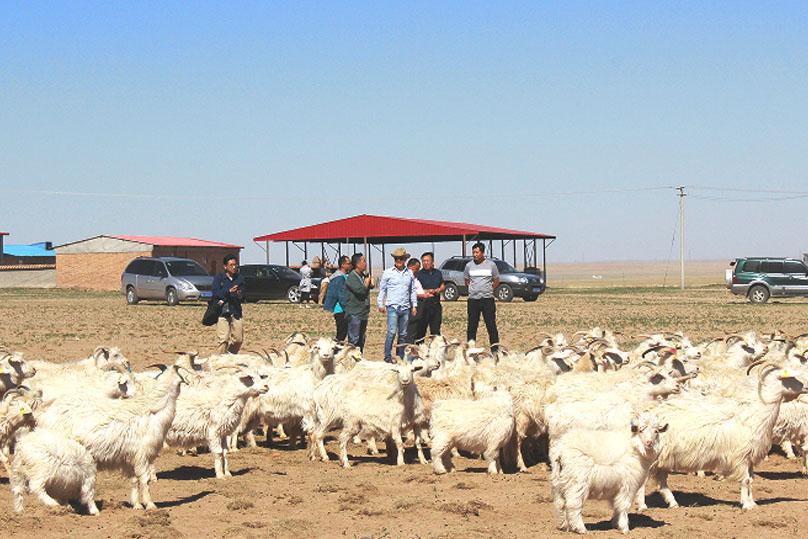 カシミヤのトレーザビリティの研究資料に。ケケン様が内モンゴル牧場に訪問。